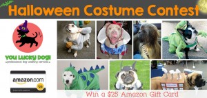 dog walking Halloween contest