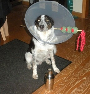 martini-dog-costume