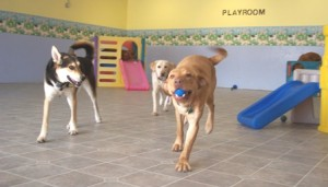 dog day care Wallingford CT