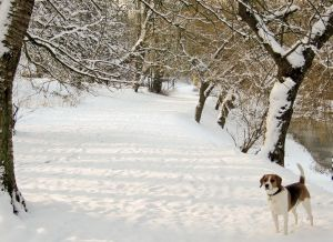 walking your dog in the snow in CT